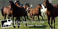 pferdebild.com