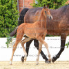 Pferdefotografie
