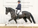 Equestrian photography